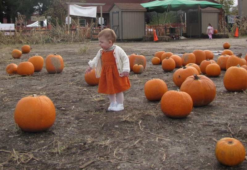 Aurora In The Pumpkin Patch