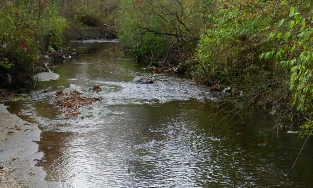 Travel The Sampawams Creek With Tom Stock