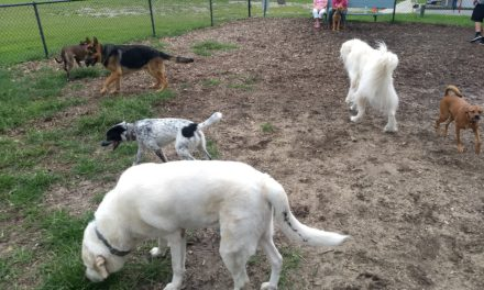 Babylon Village Dog Parks And Playgrounds To Re-Open Thursday, June 18th
