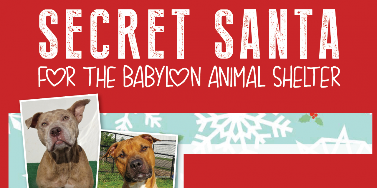 Become A Secret Santa For A Babylon Animal Shelter Dog or Cat!