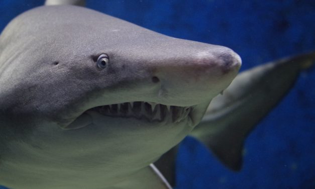 Monday Babbles – Scary Sharks, Tasty Tuesdays And More